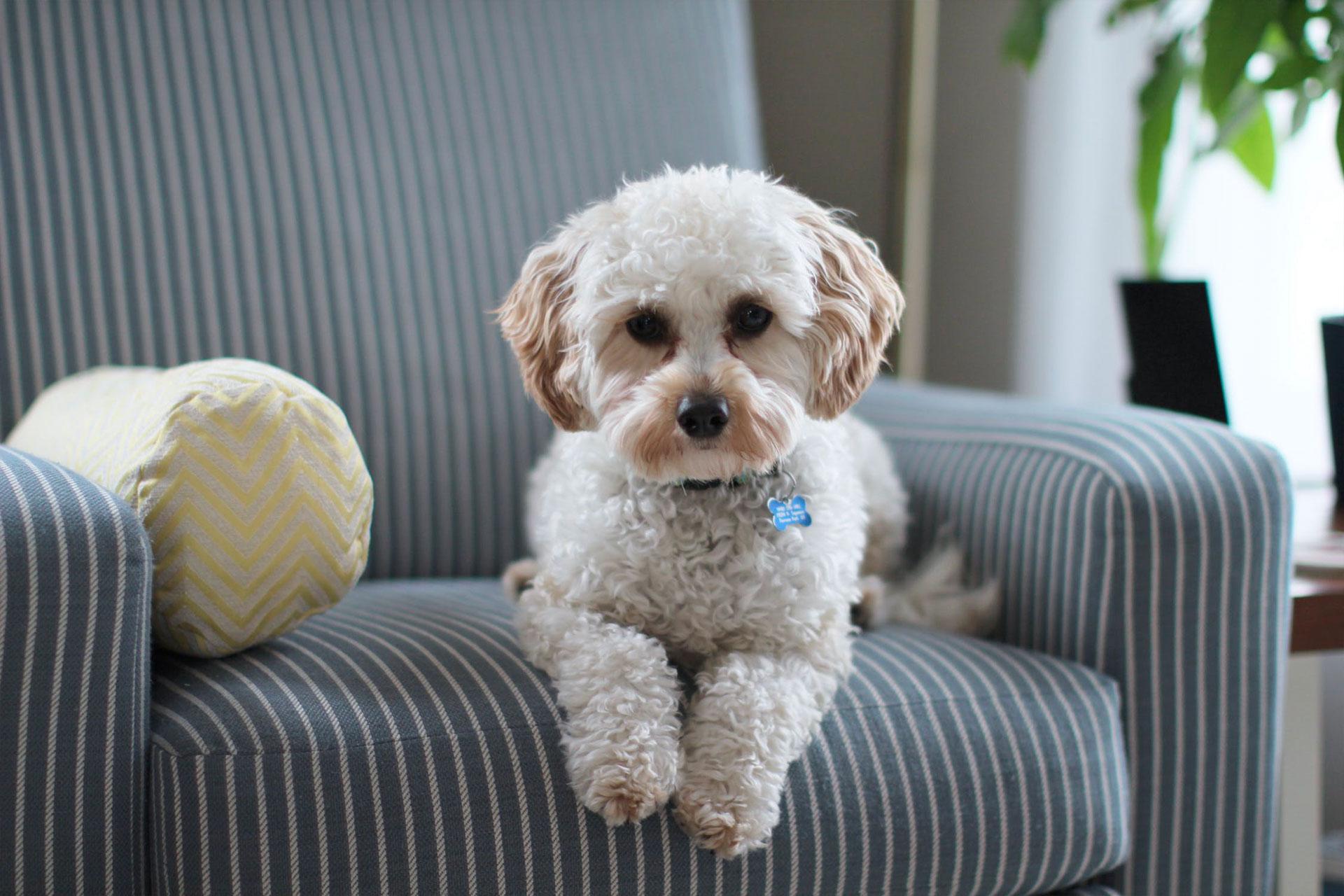 OZONO la soluzione per eliminare parassiti e zecche dai cani